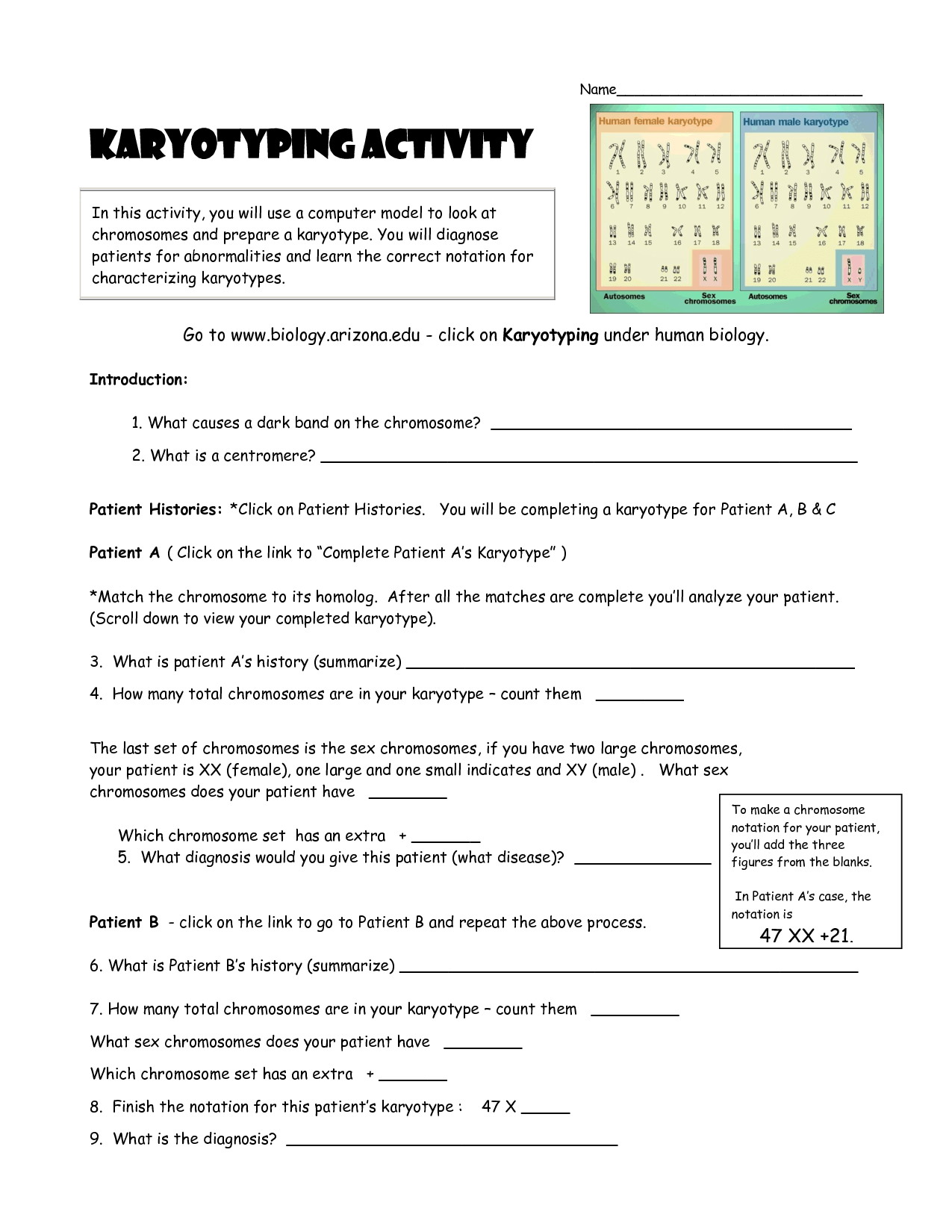 Human Cell Worksheet Matching