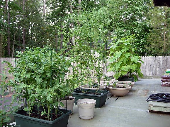 Container Vegetable Gardening Ideas Home Design And Decorating