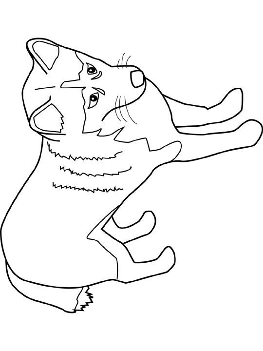 Free Coloring Pages Of Alaskan Animals