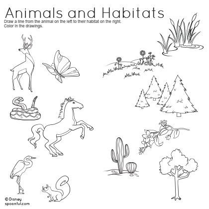 Animal Habitats Worksheets animal habitats worksheets 2nd
