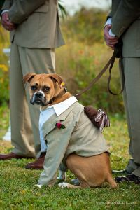 Best 25+ Dog wedding outfits ideas on Pinterest | Dog ...