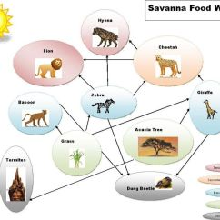 How To Create A Food Web Diagram Residential Thermostat Wiring Savanna Biome Images Let 39s Learn Pinterest Biomes