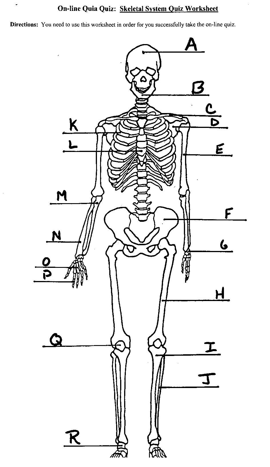 worksheet. The Skeletal System Worksheet Answers