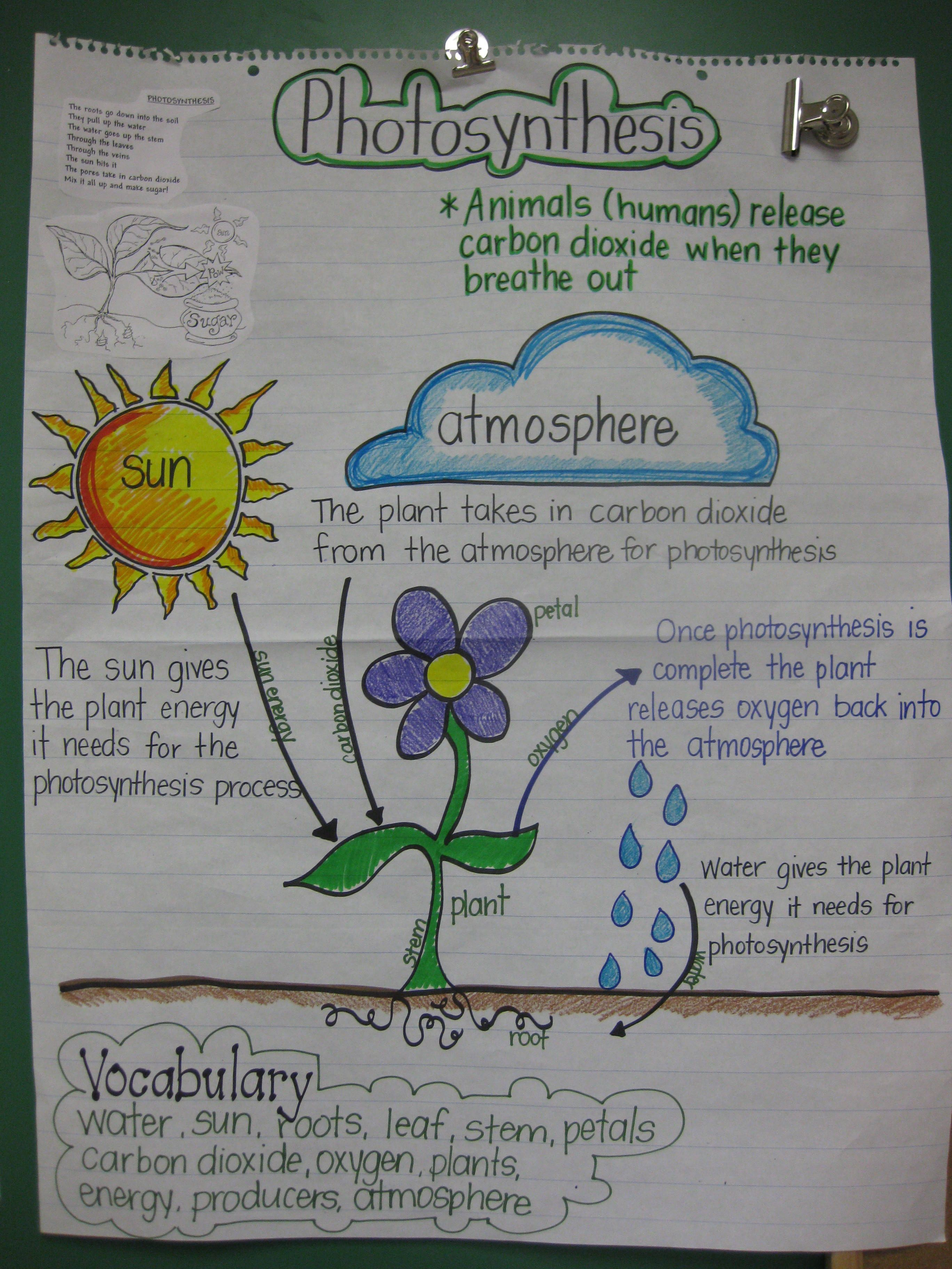 photosynthesis process diagram for 5th grade bi wiring speakers staar review anchor chart science