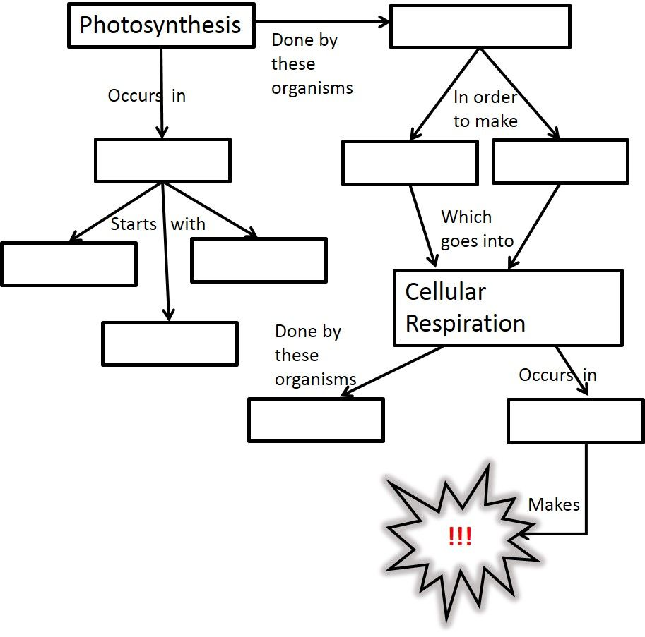 Photosynthesis And Cellular Respiration Activities Middle