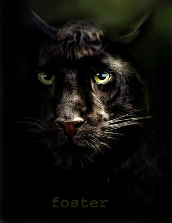 Black Panther Painting Art Big Cats Leopard Drawing