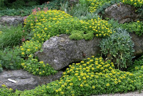Plantjes & Kunstige Stenen In De Rotstuin  Aanleg