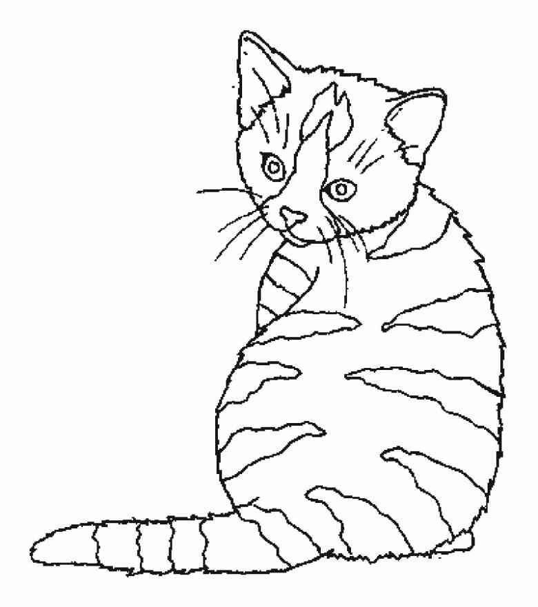 Bild-katze-malvorlage-7jpg (780×881) cats Pinterest