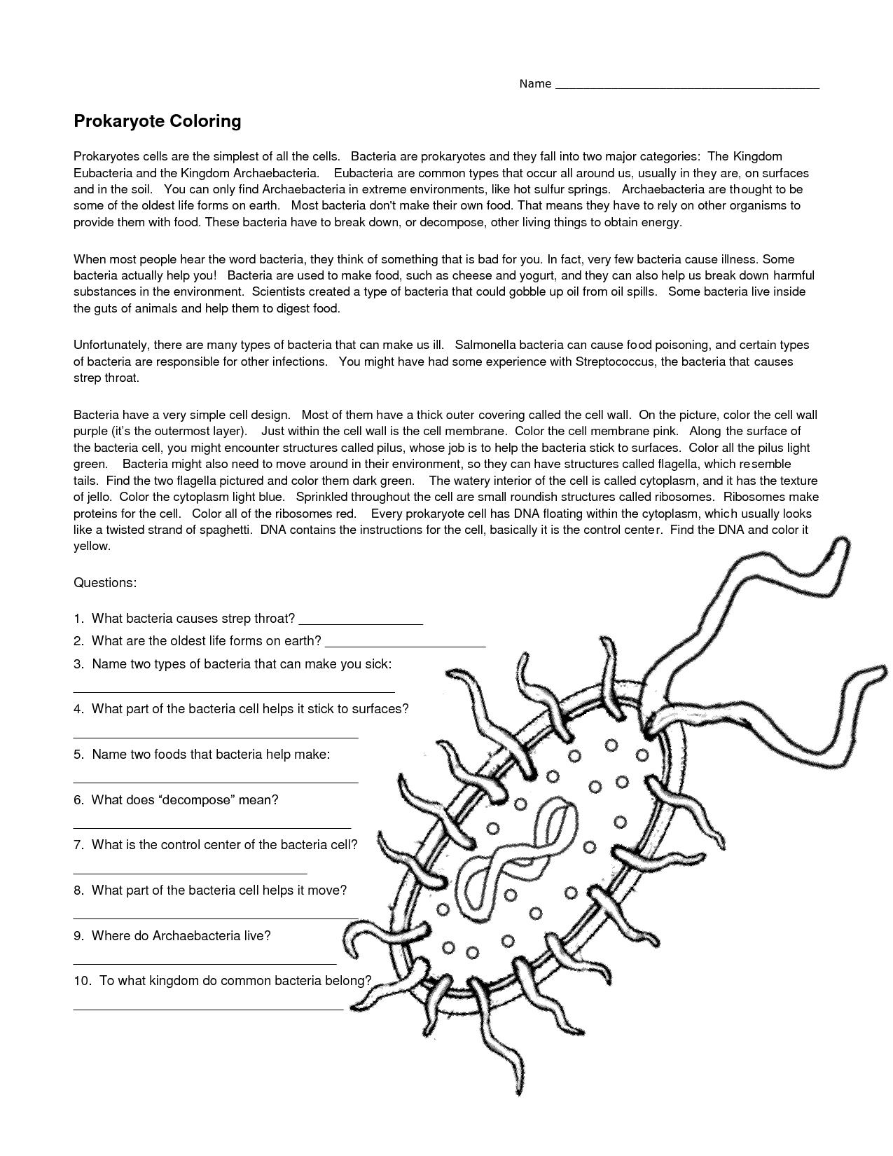 Eubacteria Kingdom Activity