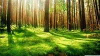 Beautiful Forest Scenery HD desktop wallpaper : Widescreen ...