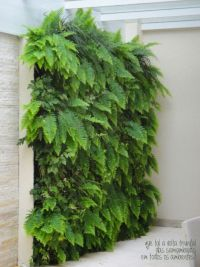 8 Awesome Vertical Gardening Ideas For Your Garden   Fern ...