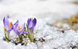 Don't Neglect Your Garden This Winter And Follow These Tips To Let