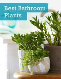 See the 6 best houseplants that can thrive in your ...