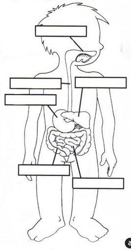 el aparato digestivo fichas infantiles del cuerpo humano