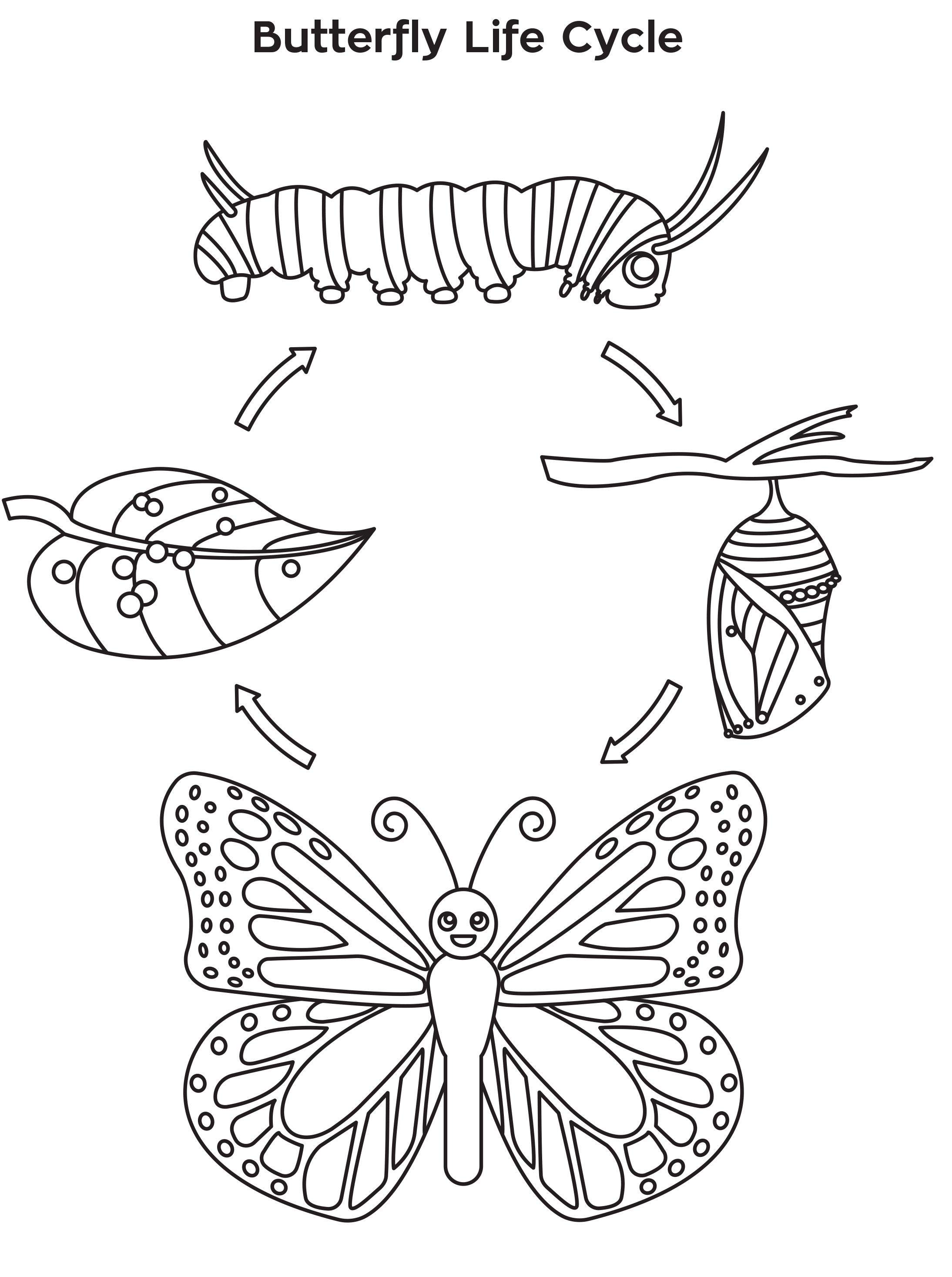Life Cycle Of A Butterfly Coloring Page Free Printable