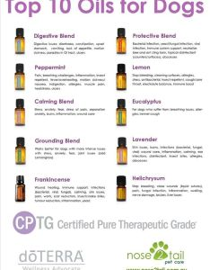 Top oils for dogs also dilution chart  great resource less is more eo fur rh pinterest