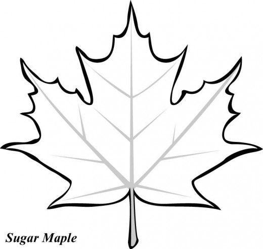 Sugar Maple Leaf Template Printable Large