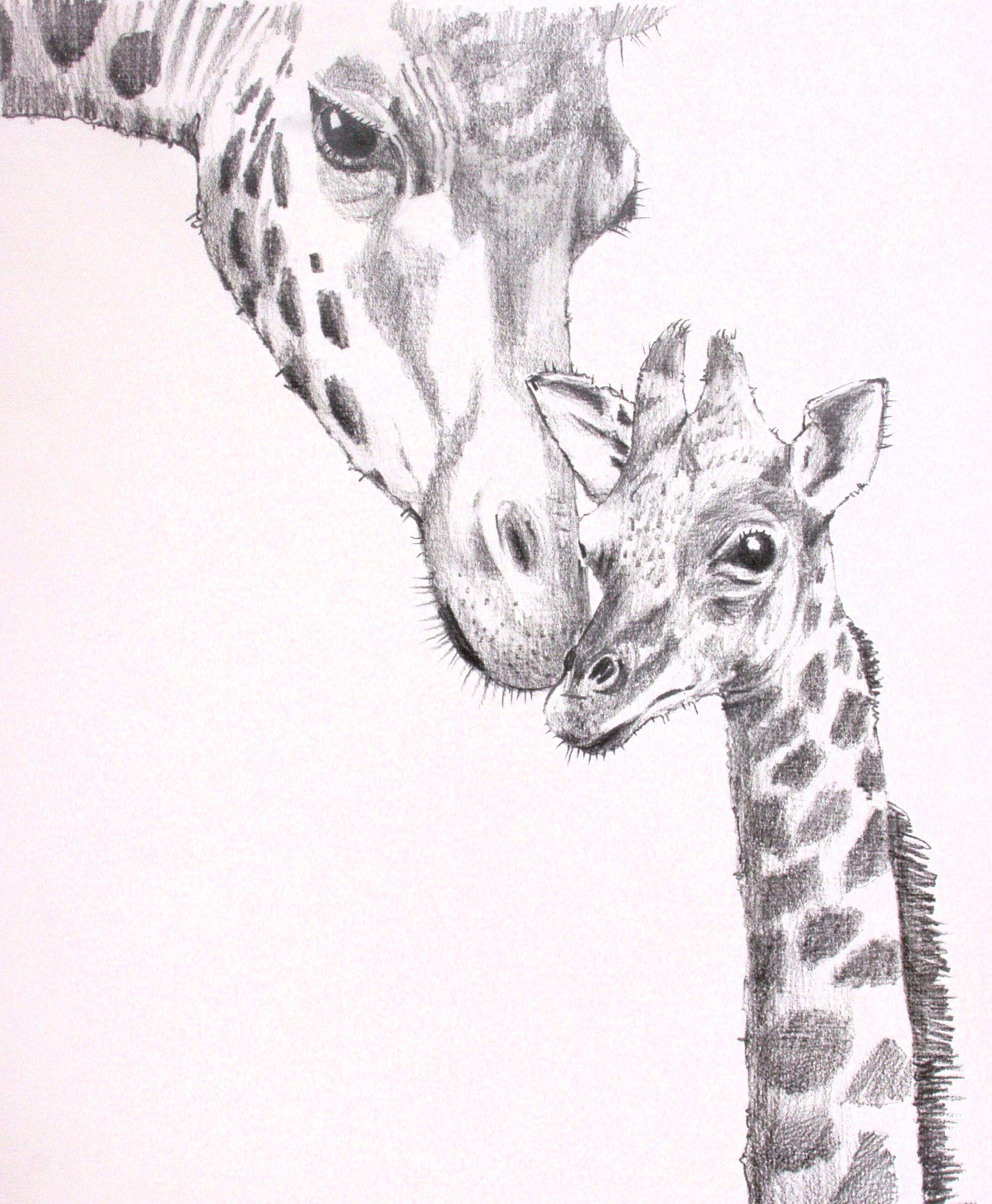 Pics For Gt Giraffe Face Pencil Drawing