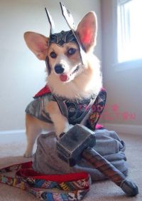 Thor dog costume