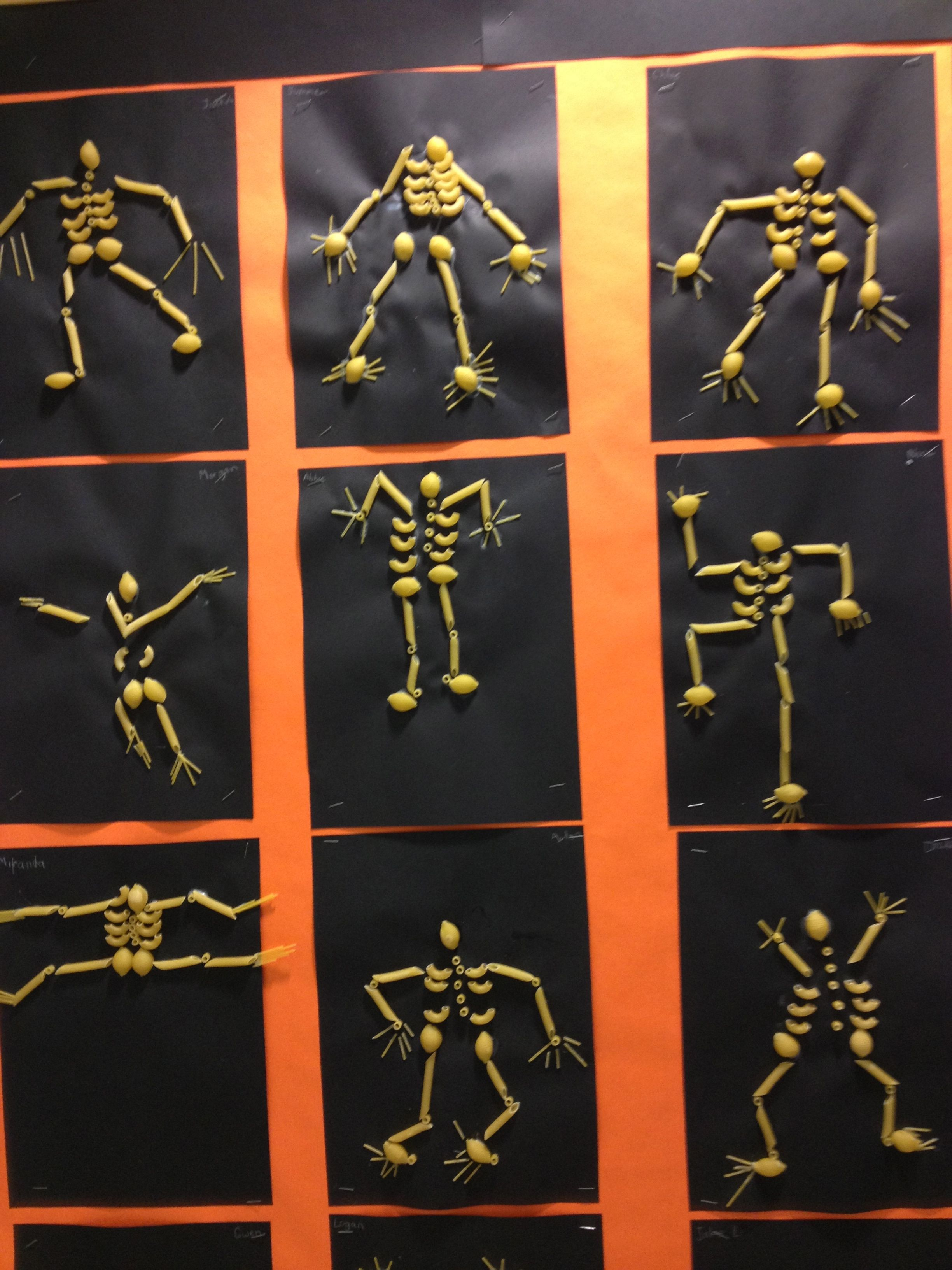 Noodle Skeletons
