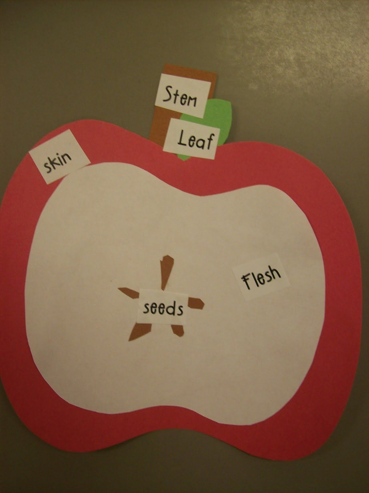 Label Parts Of An Apple