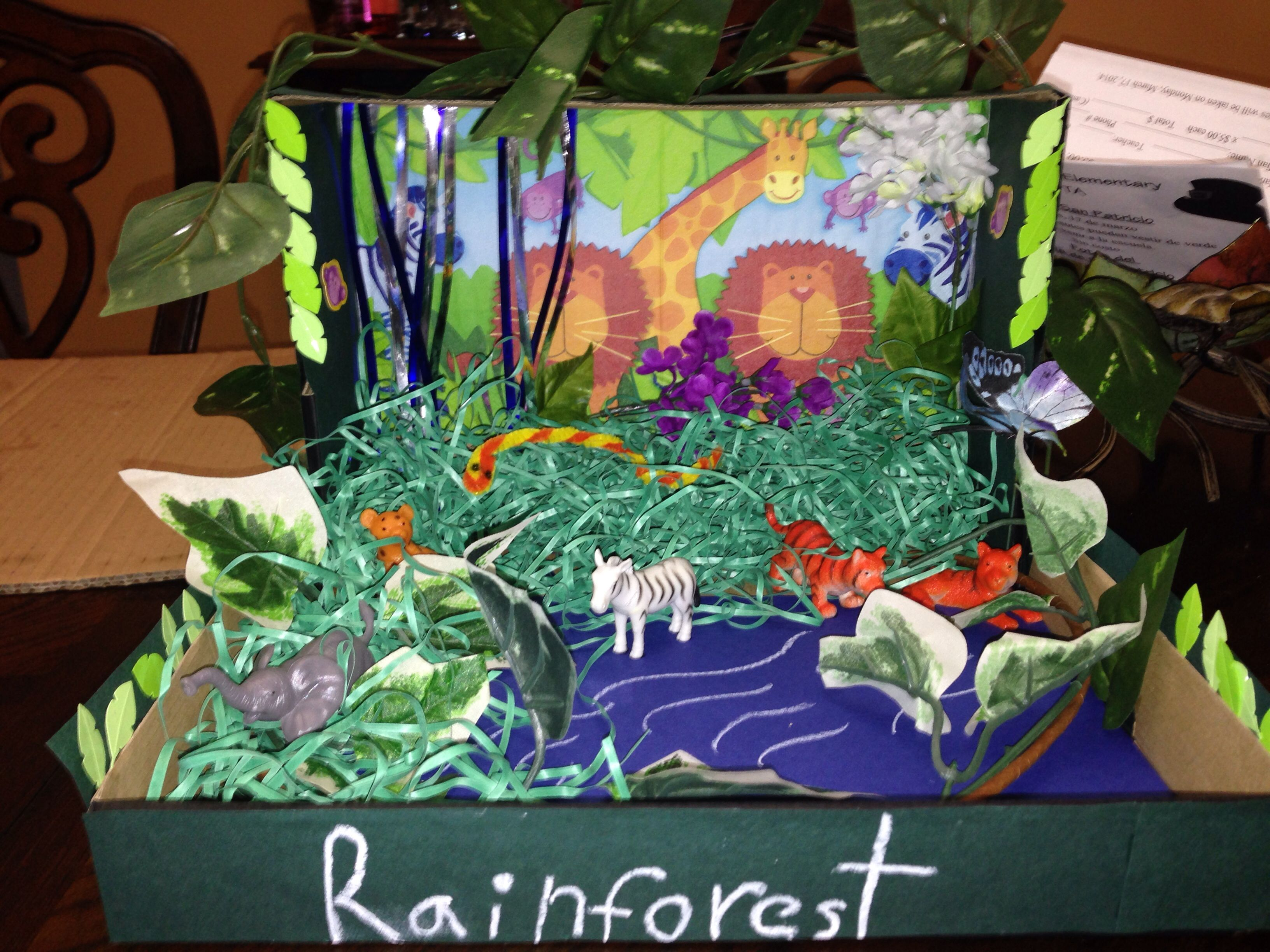 Rainforest Habitat Diorama Project 1st Grade