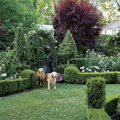 5 Design Ideas For Sheared Shrubs Gardens Two Dogs And Doors