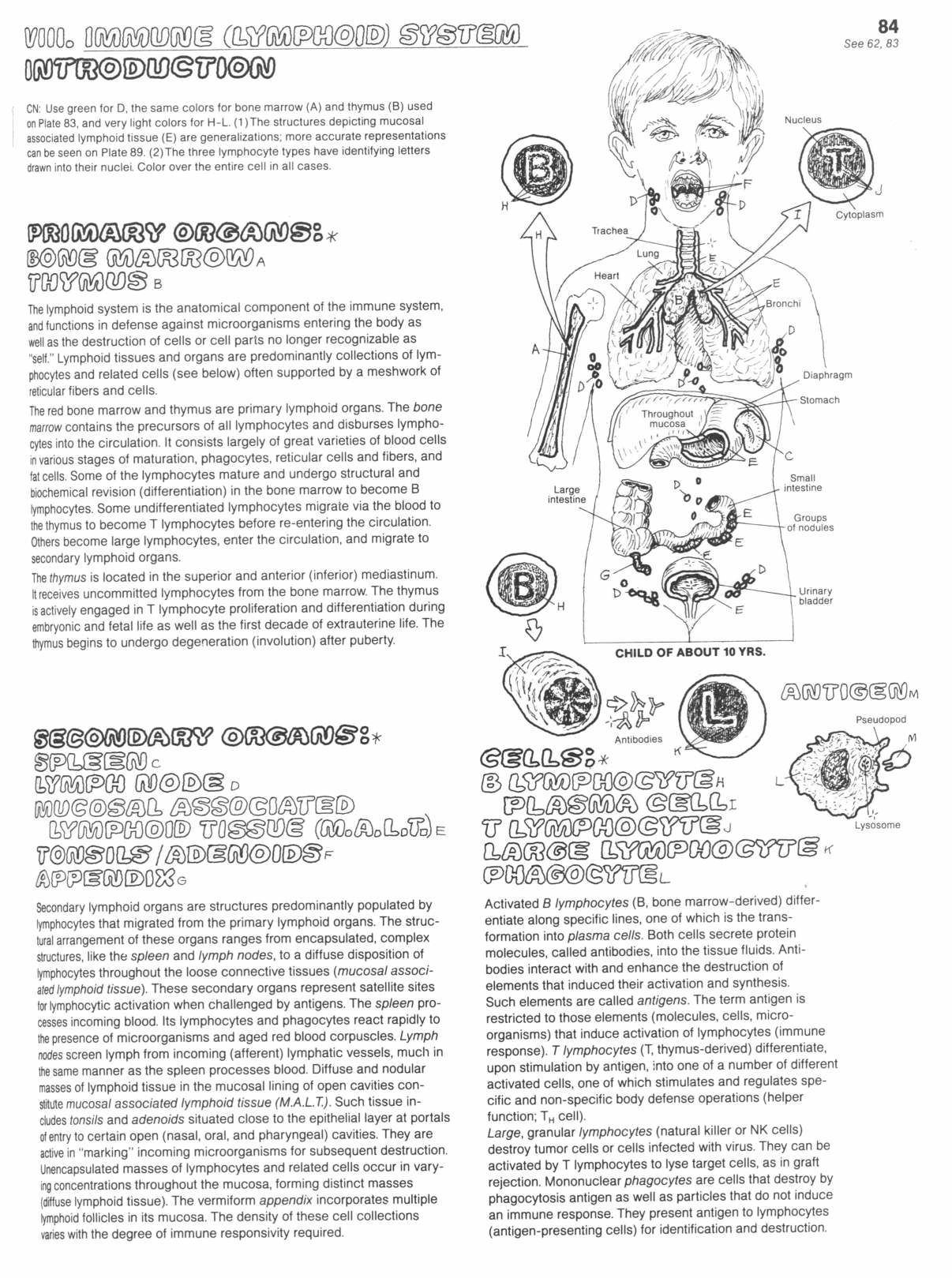 Intro To The Immune System Coloring Page