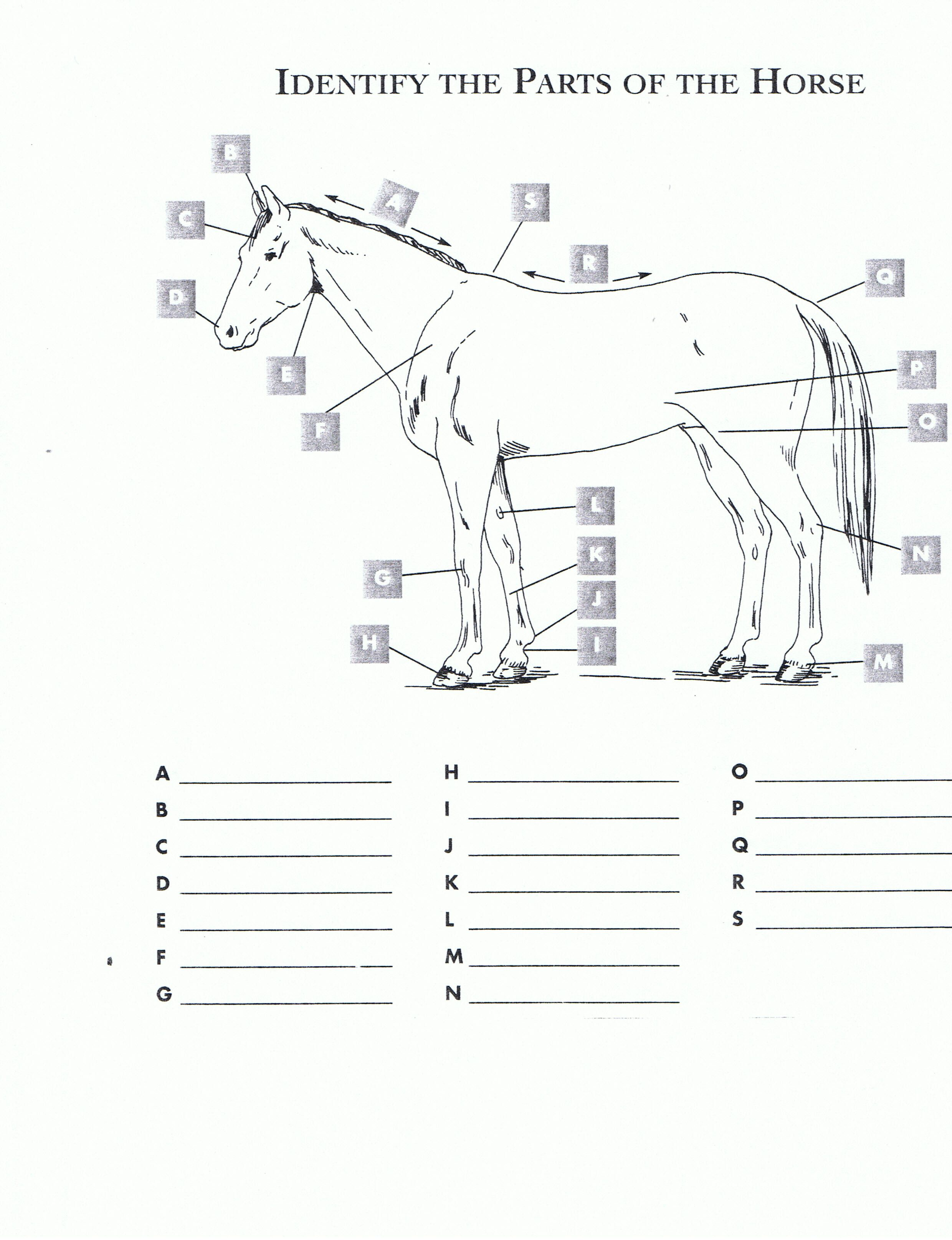 Free Printable Horse Worksheets