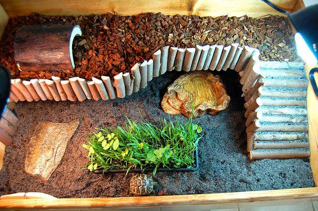 17 Best Images About Tortoise Habitat On Pinterest Tortoise