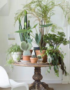Room ideas also villa bentveld vt wonen flowers pinterest plants gardens and rh