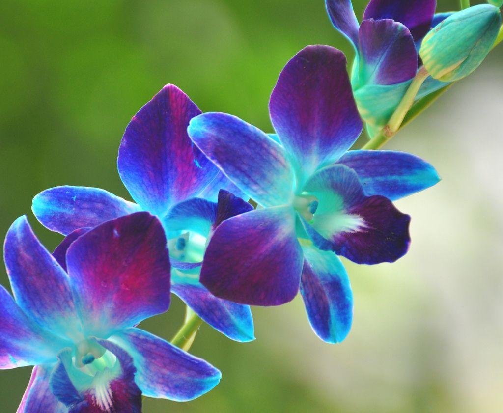Best 25 Blue orchid tattoo ideas on Pinterest  Colorful flower tattoo Geometric orchid tattoo