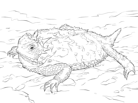 Realistic Texas Horned Lizard coloring page from Horned