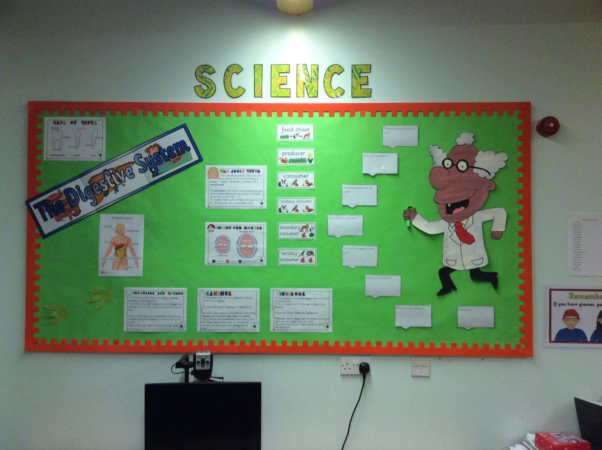Year 4 Science Display