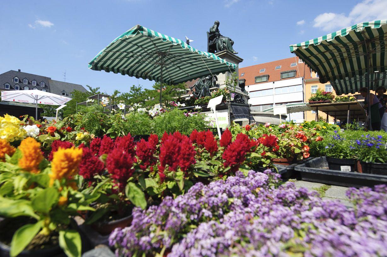 Blumen am Marktplatz in Schweinfurt  httpwwwschweinfurt360de Blumen  Germany  Pinterest