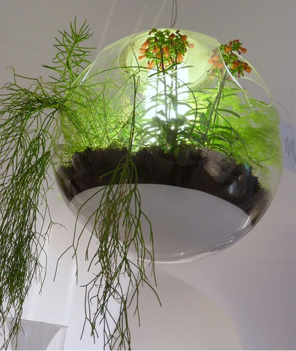 Babylon Chandelier Is An Ode To Nature A Transpa Bubble Houses Living Plants