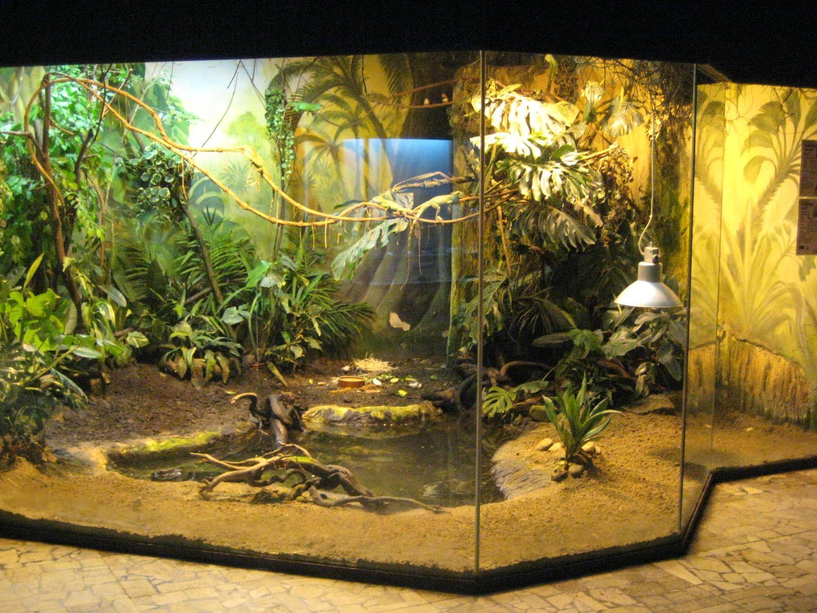Reptiles Habitat Worksheet