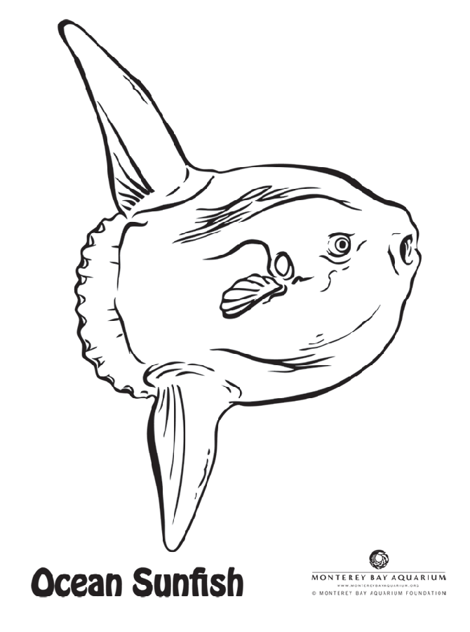 We wanted some new coloring pages for the Aquarium website