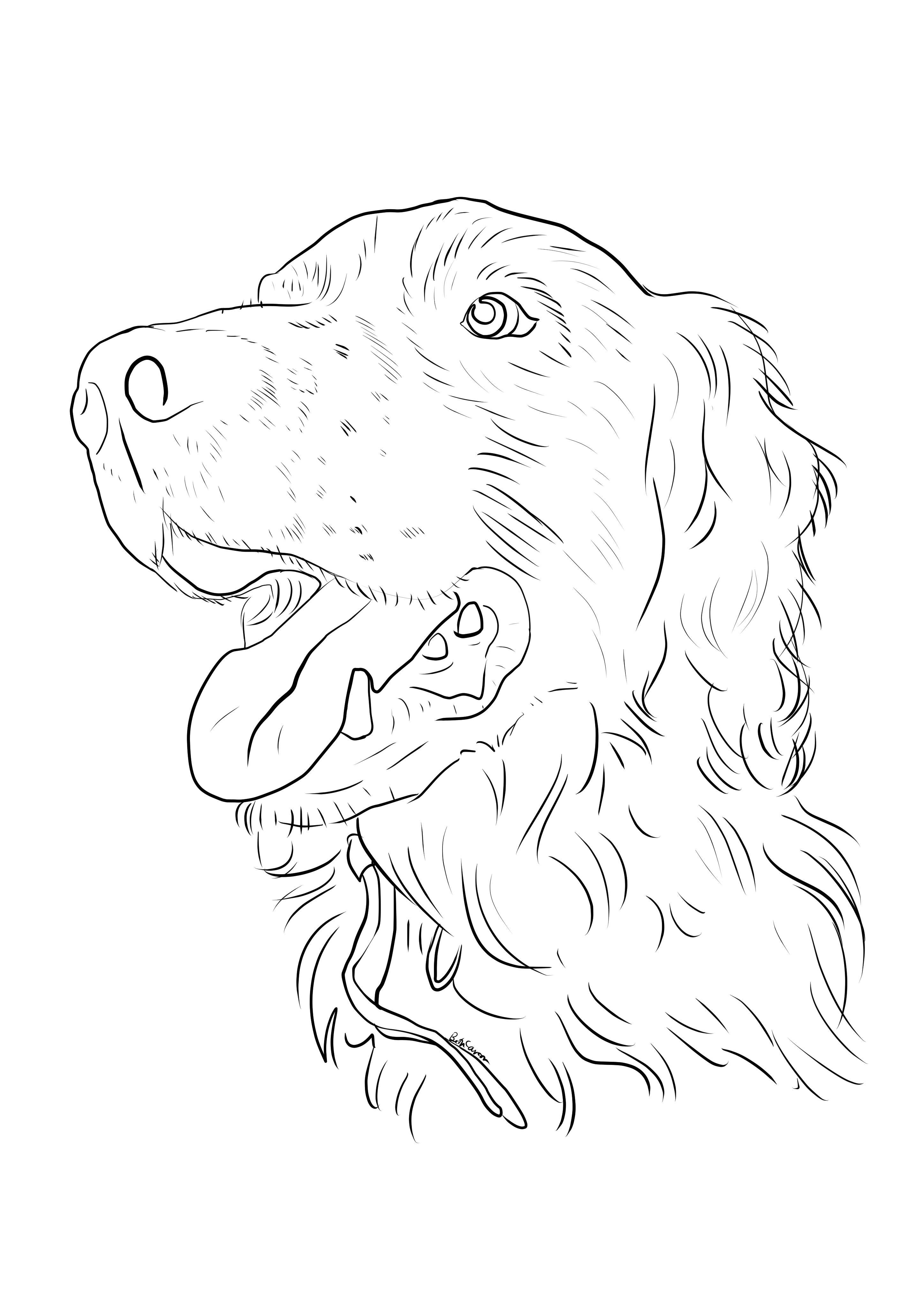 Springer Spaniel coloring page! Beth Carson 2014