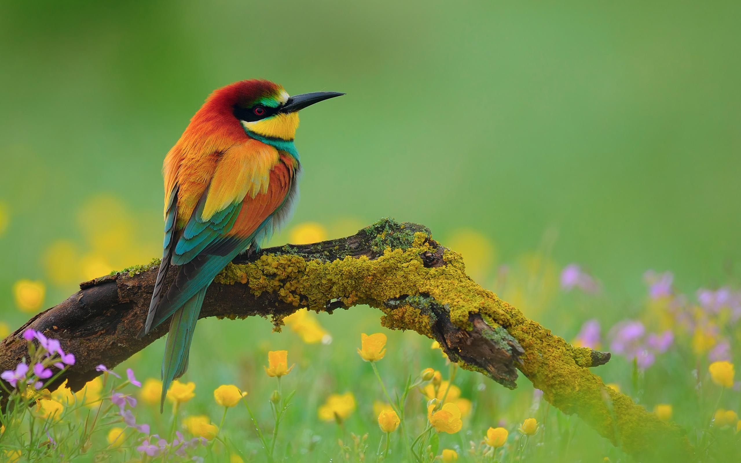 https://images.search.yahoo/images/view | birds | pinterest