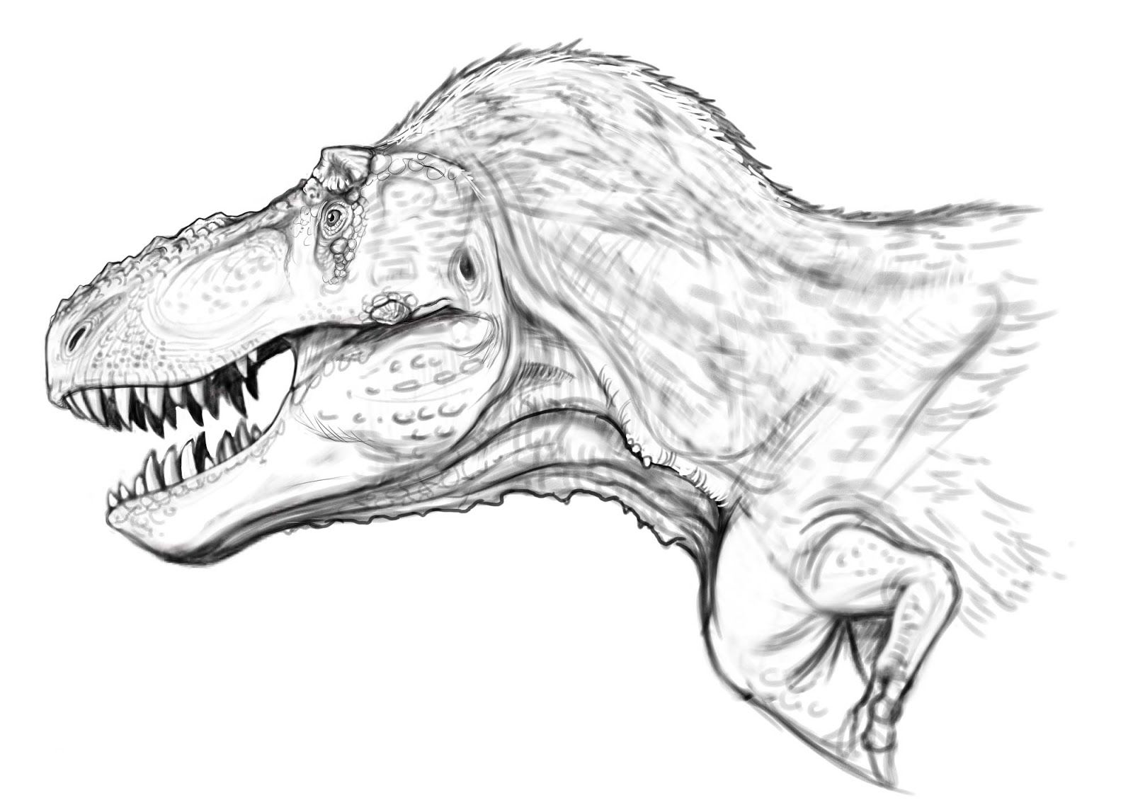 Tyrannosaurus Rex Head Study By Raul A Ramos