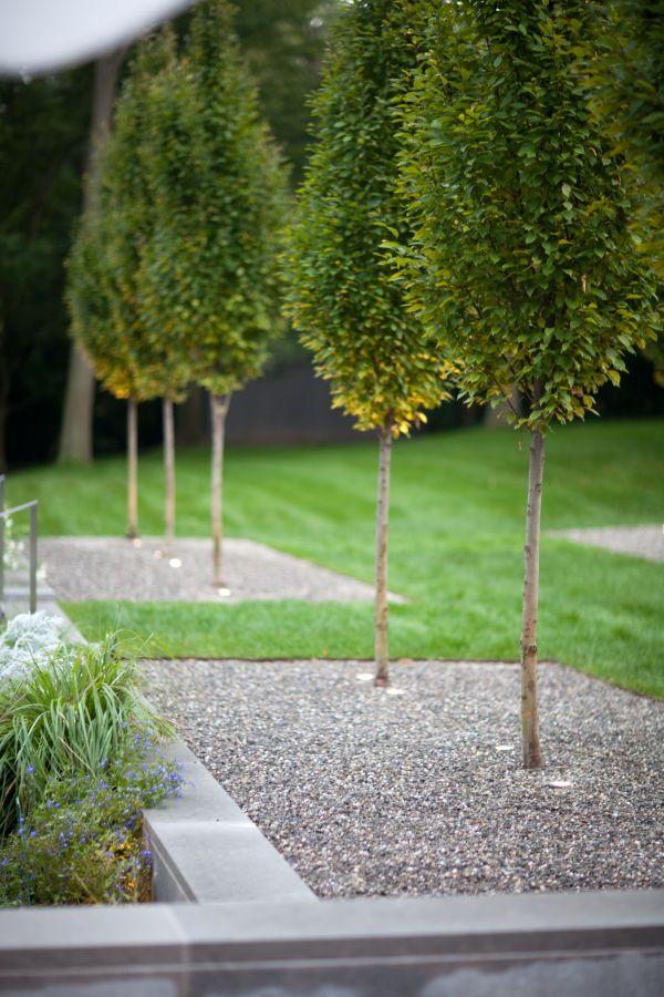 jardin moderne avec du gravier