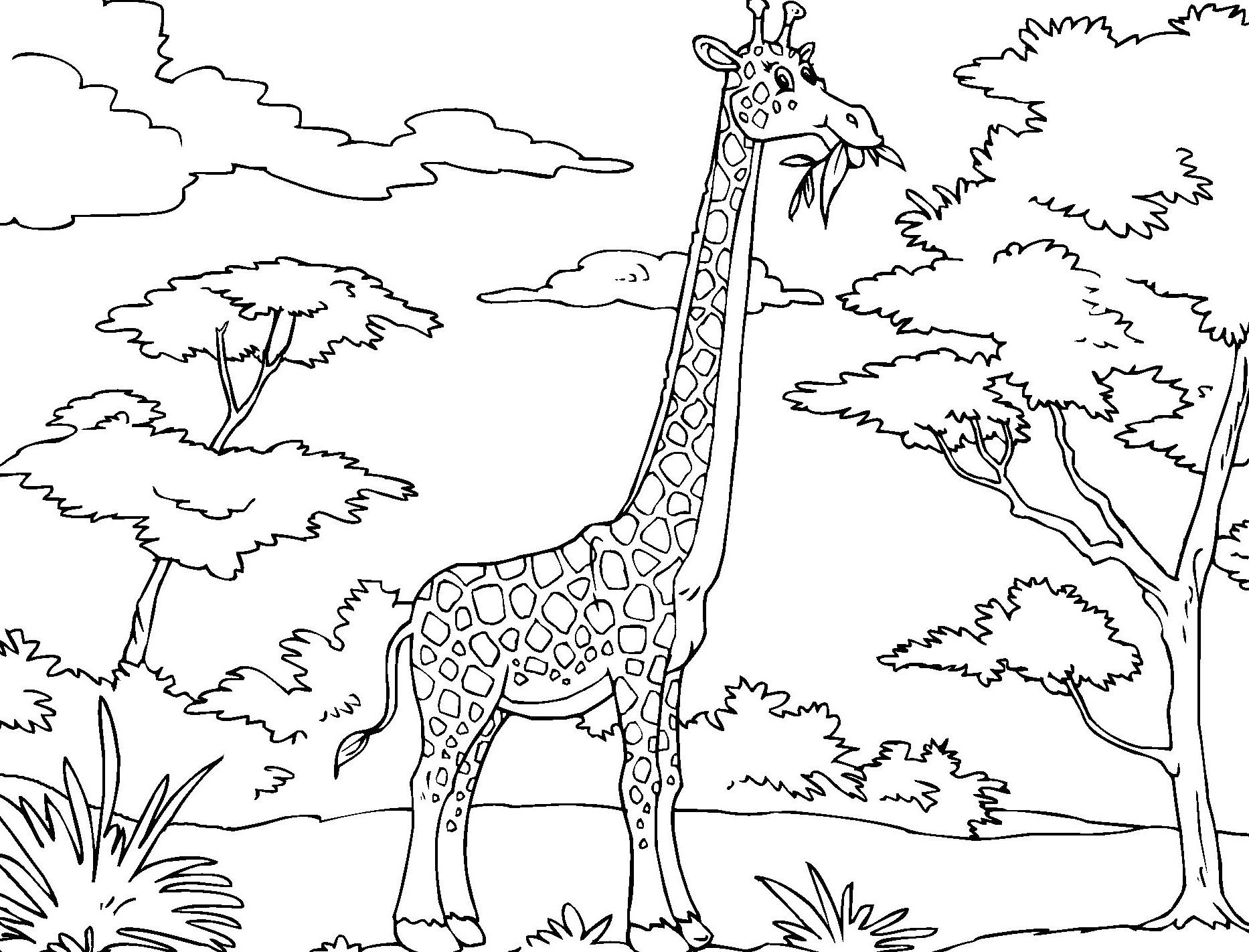 Printable Giraffe Coloring Pages