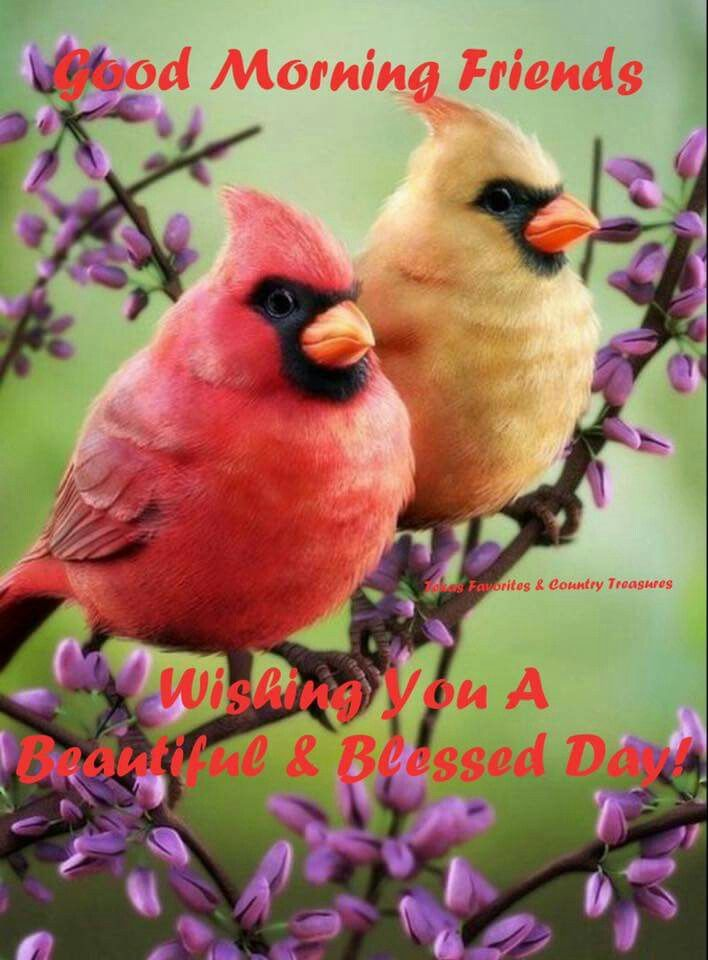 Good Morning Friends Wishing You A Beautiful Amp Blessed