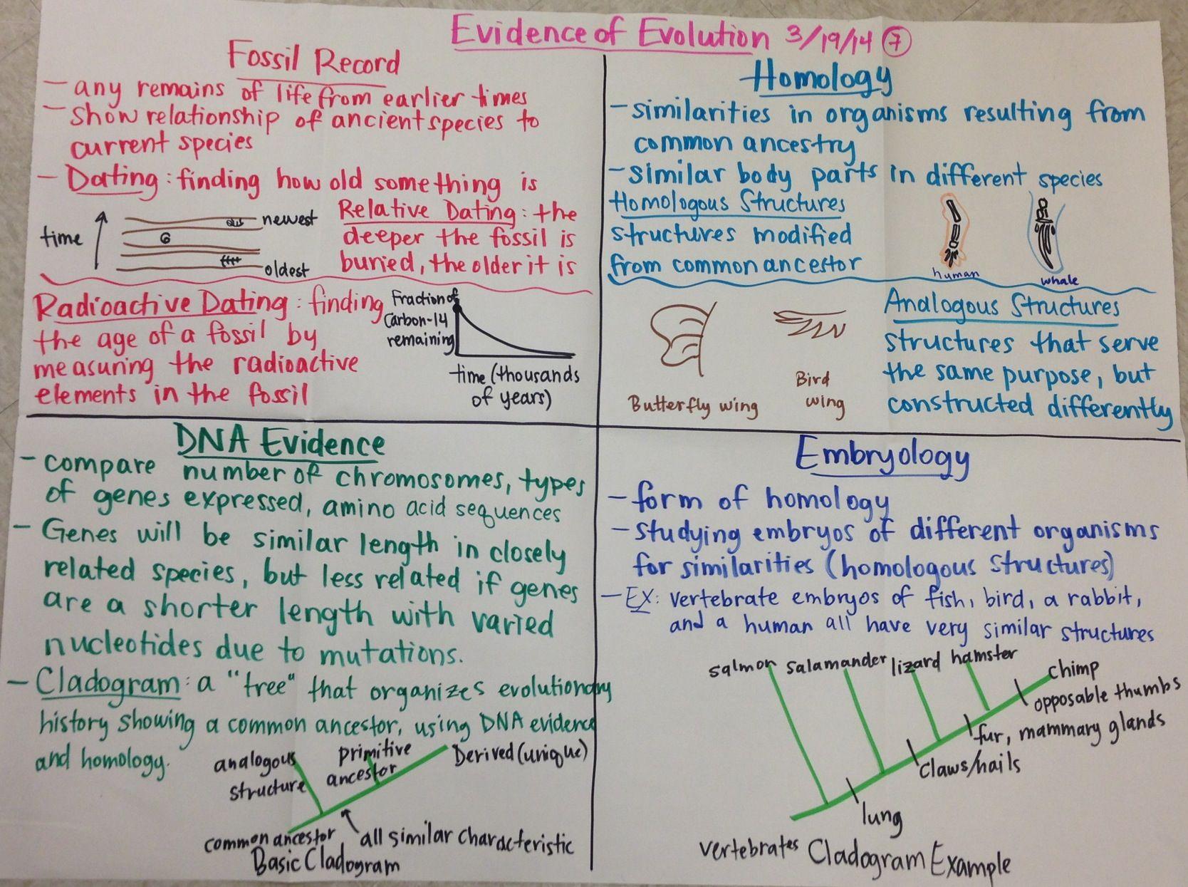 Evidence Of Evolution Biology Glad Anchor Chart
