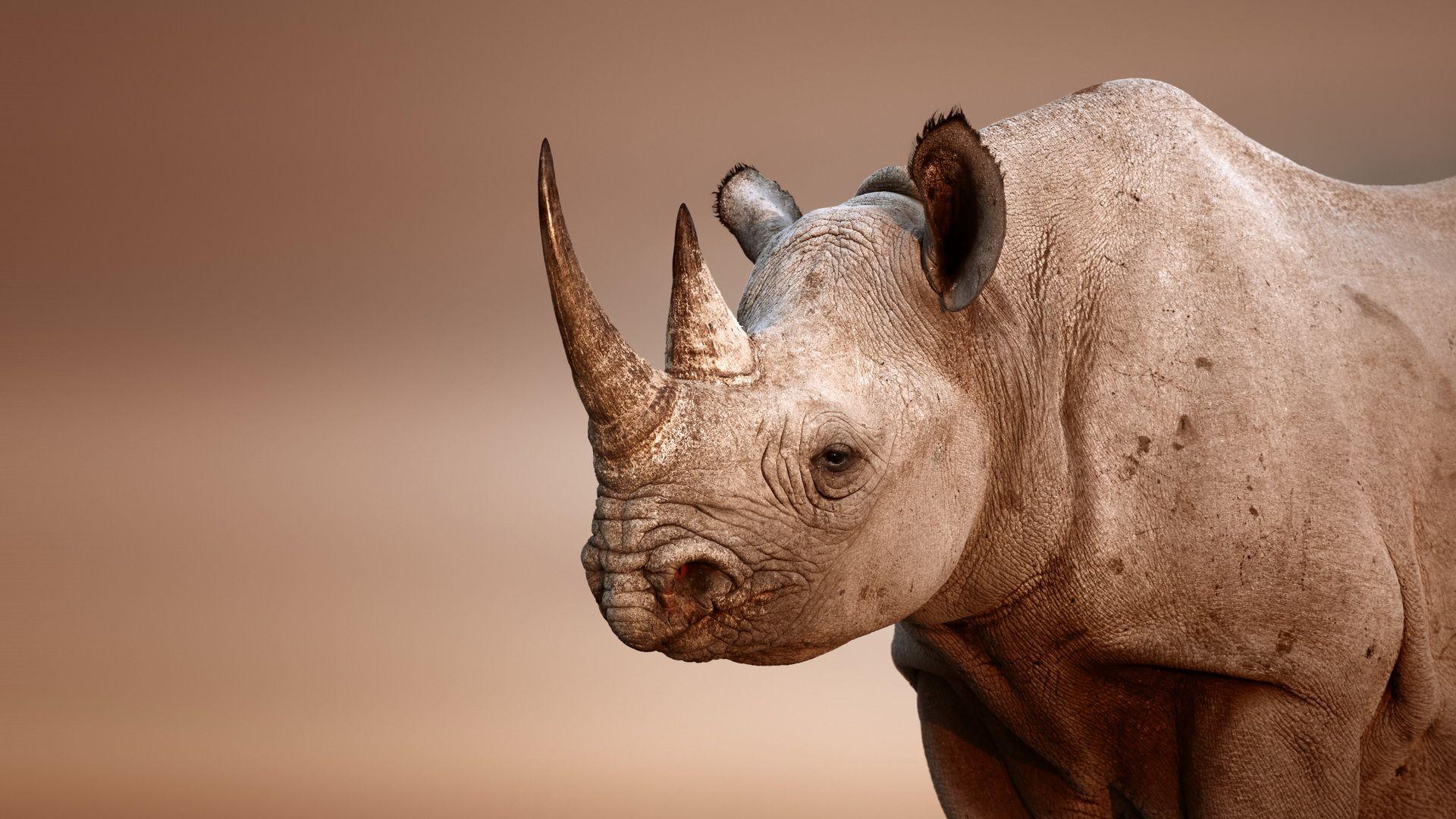 fantastic hd rhinoceros wallpapers   wallpapers   pinterest