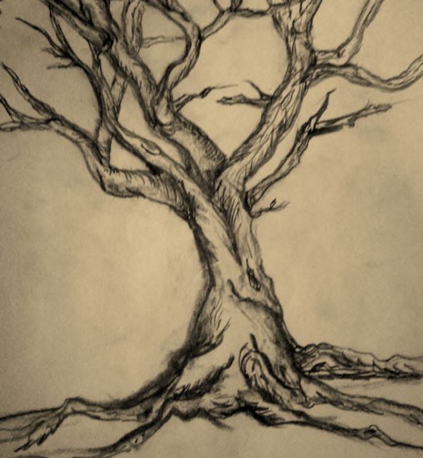Tree Drawing Form Vonalak Sznek