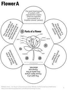 PARTS OF A FLOWER VOCABULARY INTERACTIVE NOTEBOOK ACTIVITY