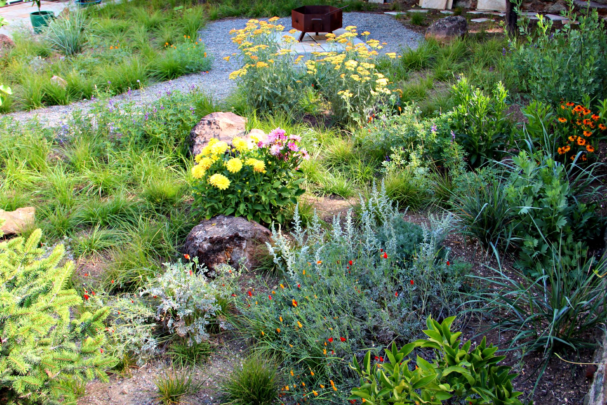 California Native Plants For The Garden Gardening With Natives