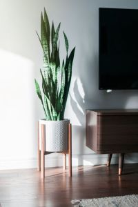 Mid Century Modern Plant Stand, Hand Made in Canada ...